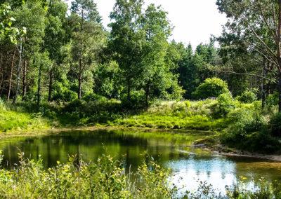 Waldbadesee  (Künstlich angelegt)