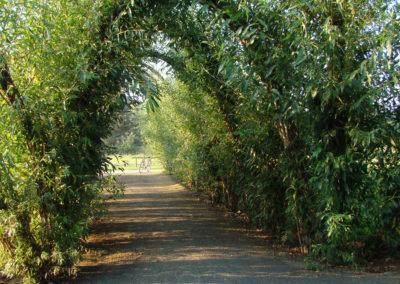 Weidendom – Sagenpfad