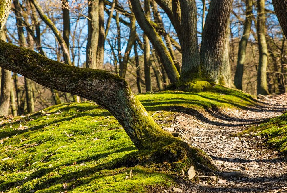 Wiederherstellung von Waldwegen